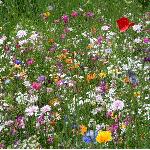 2020 Gardens Day